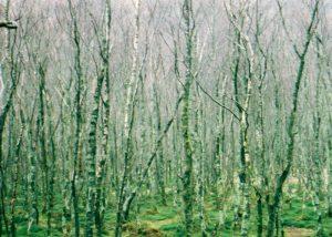 Fotografia di un bosco nella nebbia